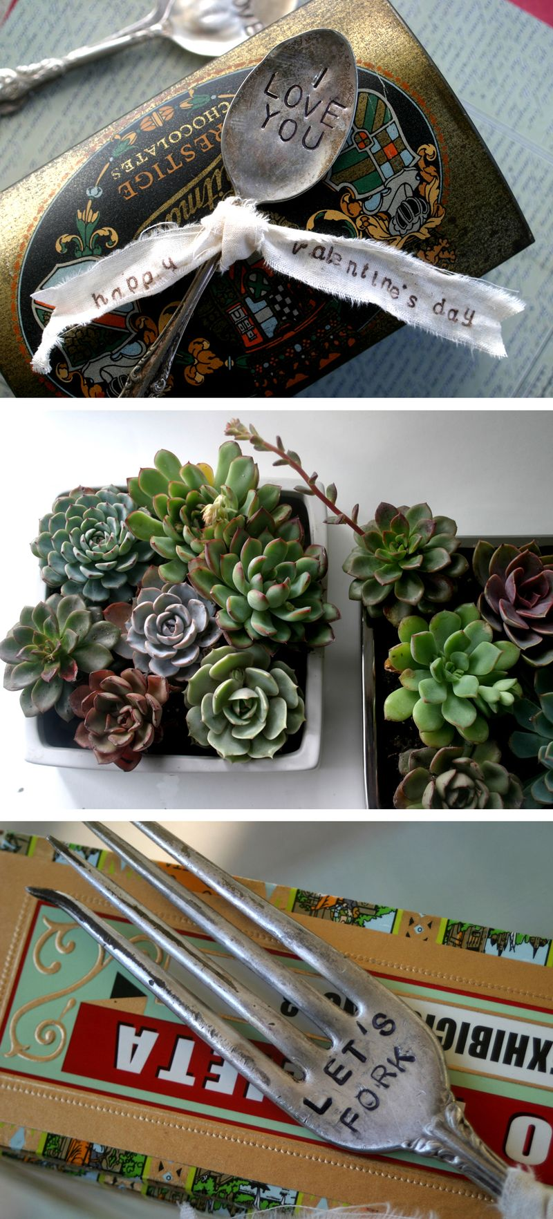 Trysucculents1